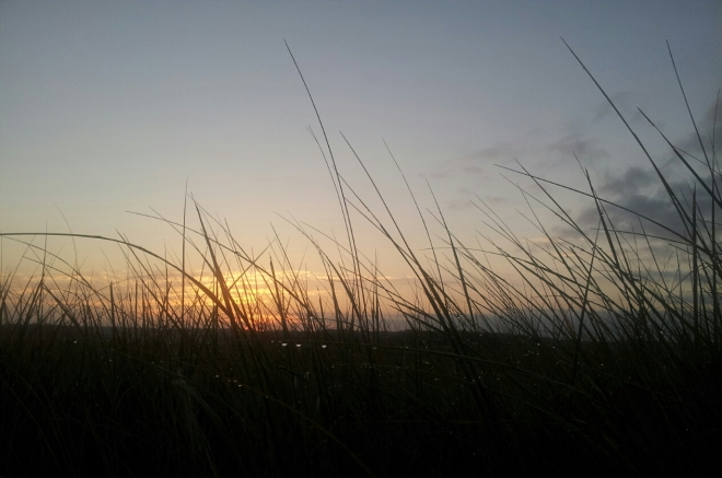 sunrise with grass