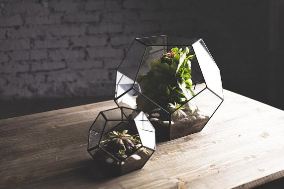 honeycomb terrariums etsy