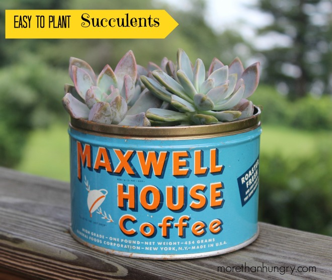 coffee can succulent with words