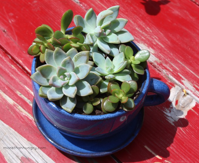 succulent-in-blue-cup-from-above logo