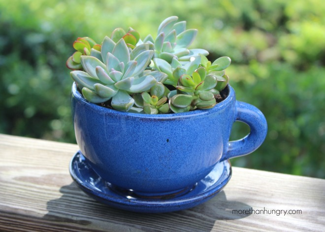 succulent-in-blue-cup logo